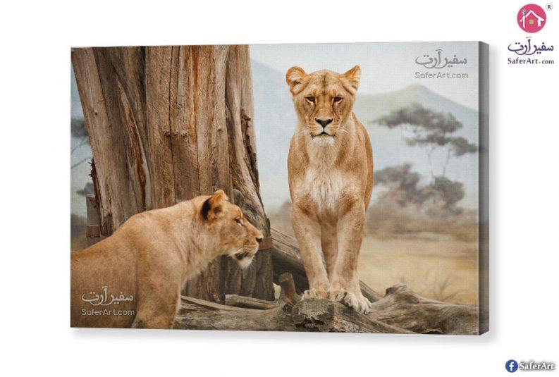 Modern-Lion-Tableau