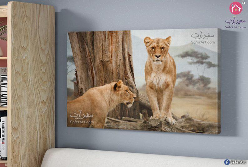 wall-art-lion