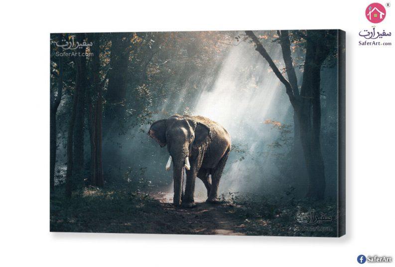 elephant-canvas