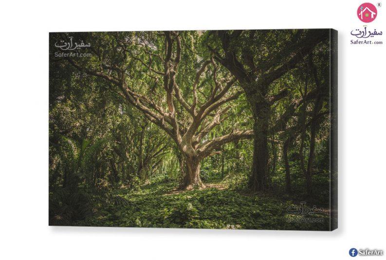 لوحه فنيه اشجار الغابه