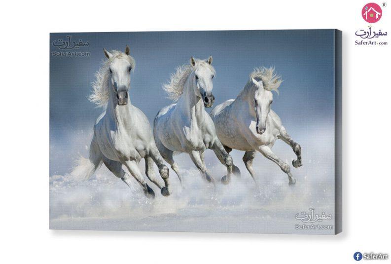 تابلوه مودرن احصنه بيضاء