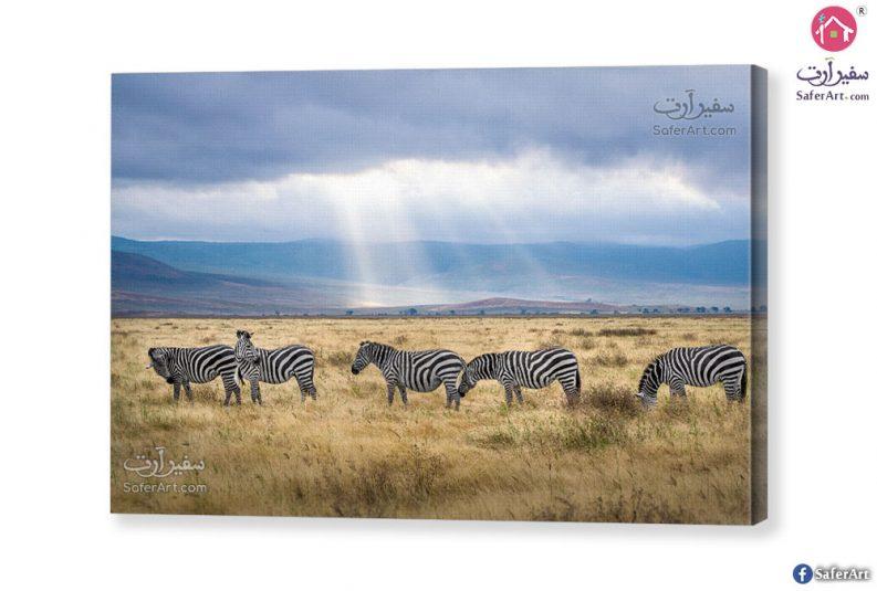 zebra-canvas