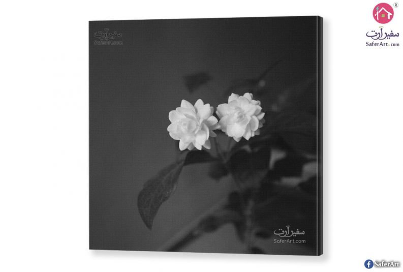 لوحه مودرن الورده البيضاء